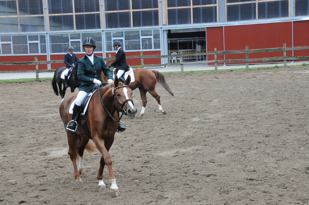 pferde videos turnier